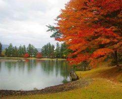 世界遺産・平泉 毛越寺 浄土庭園の紅葉