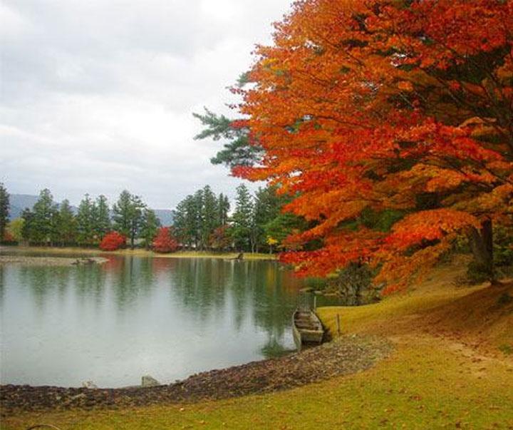 毛越寺浄土庭園の紅葉